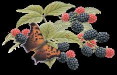 blackberry_art